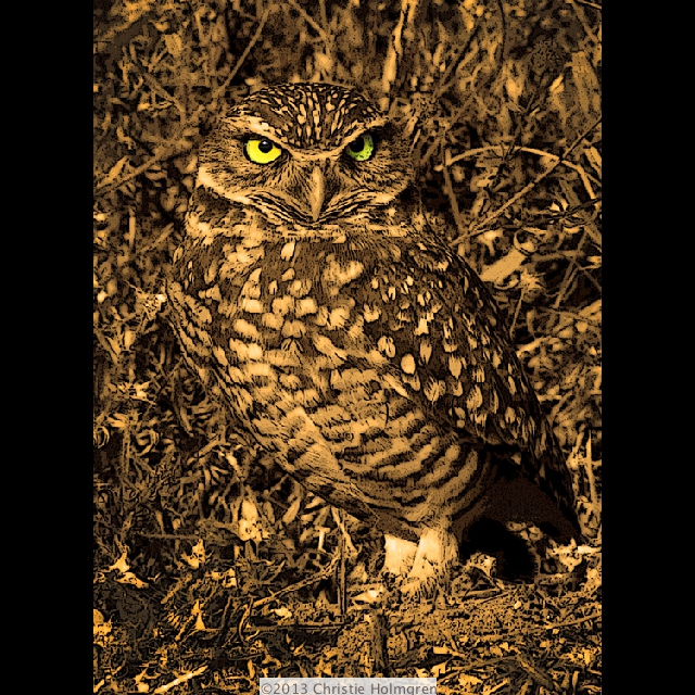 Burrowing<br/>Owl<br/>Sepia