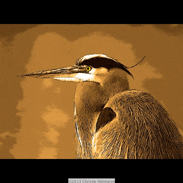 Great<br/>Blue Heron<br/>Sepia