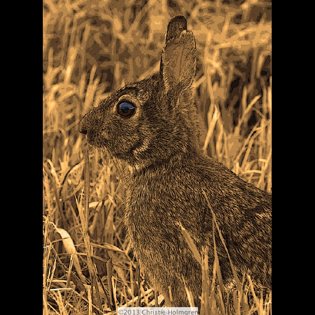 Rabbit<br/>Sepia