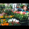 Paris<br/>Flower<br/>Market